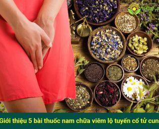 bài thuốc nam chữa viêm lộ tuyến cổ tử cung